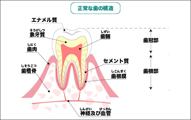 歯 の 神経 抜く